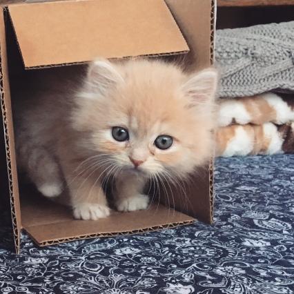 Poppy in a Box